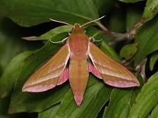 dca47fe38 Fotografování nočních motýlů: Praktické rady a tipy - Články ...